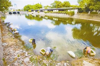 9月初,工人种水草,建设水下森林立体生态系统.