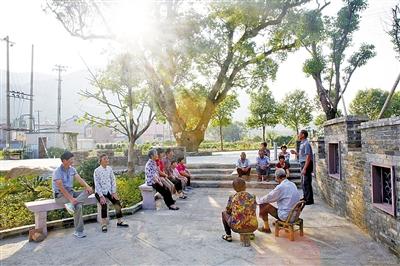 乡村大树下的公共空间
