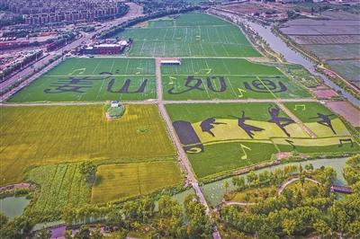 姜山打造万亩都市现代农业示范区