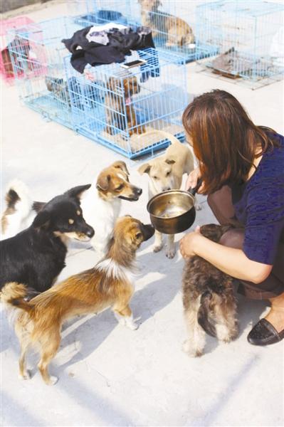 前天下午,在天伦广场举行的一场爱心领养动物活动中,26只流浪狗被新