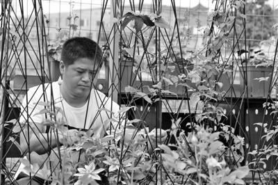 为爱返回乡村造花园   别看姚吕梦夫妻俩现在伺弄花草十分内行