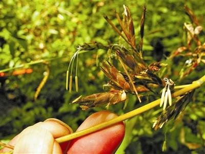 竹子cad平面素材