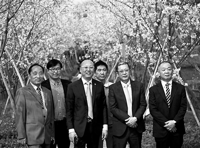 将冰见市著名的朝日山公园樱花景观传送给你们